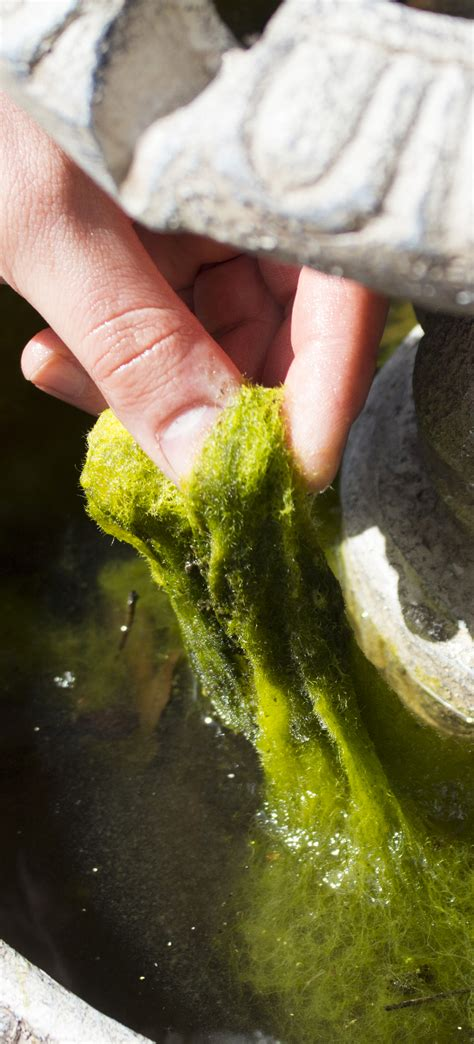 self contained water feature with algae pond aquarium