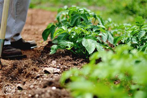 Garden Weed Control Grass Killer For Vegetable Gardens