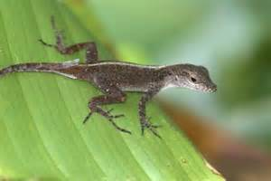 Do Lizards Shed by Cycles Of Lizards With Pictures Ehow