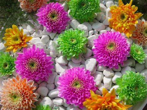 beautiful wallpaper beautiful colorful flower wallpapers