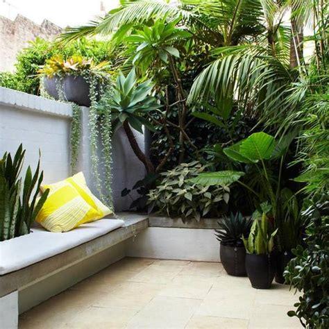 terrazzo con piante foto terrazza con piante tropicali di rossella cristofaro
