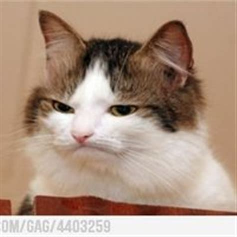 Annoyed Cat Meme - annoyed cat pictures images photos photobucket
