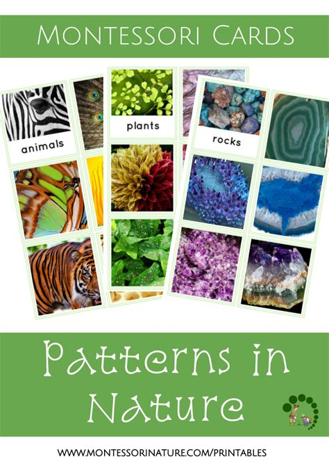 patterns in nature kindergarten lesson patterns in nature montessori nature