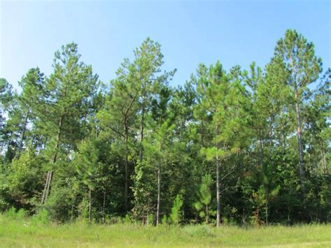 292 ac post oak rd land for sale kountze hardin