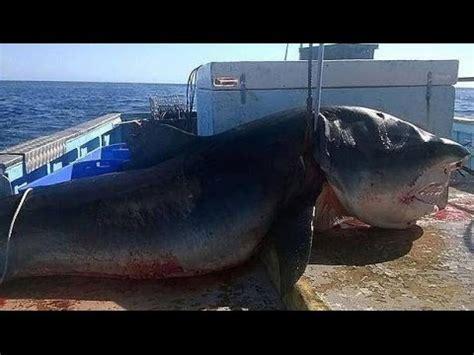 imagenes reales de un megalodon capturan al monstruoso tiburon megalodon en australia
