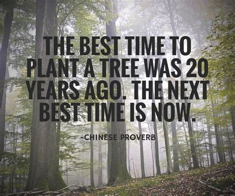 best time to plant the best time to plant a tree bits of wisdom