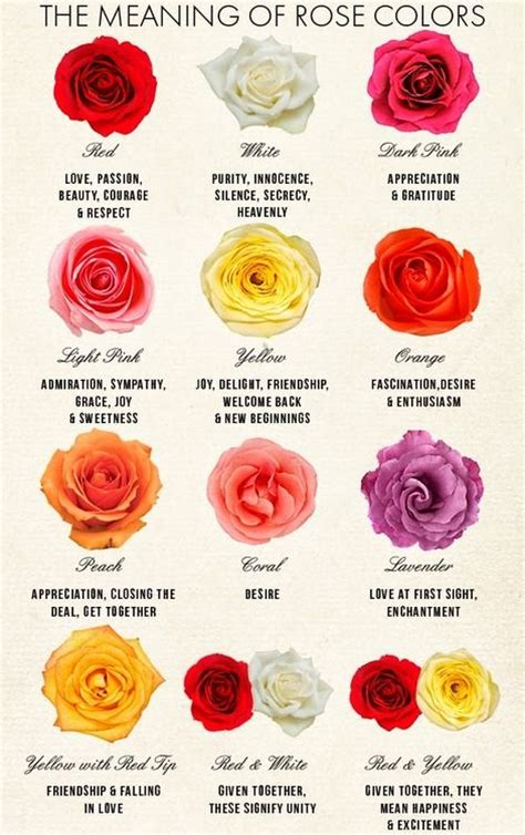 flower color meaning best 25 color meanings ideas on purple