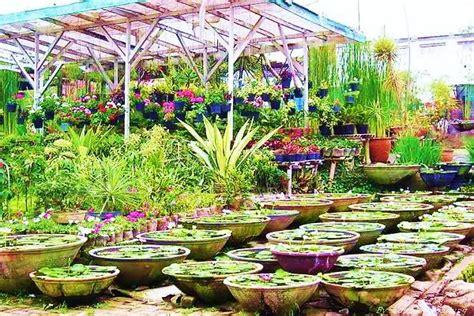 Bibit Bunga Hebras profile taman bunga cihideung bandung