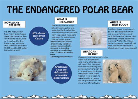 Polar Extinction Essay by Saving The Polar One Cap At A Time