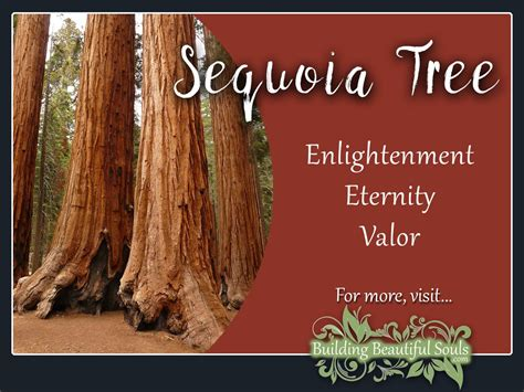 tree meaning sequoia tree meaning symbolism tree symbolism meanings