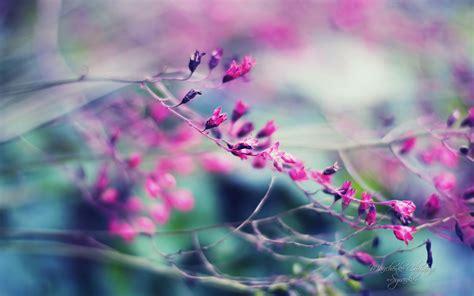 sfondi fiore sfondi hd fiori 70 immagini