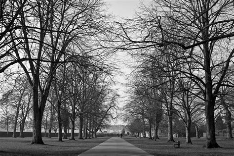 banco caminos on line parks trees black and white 183 free photo on pixabay