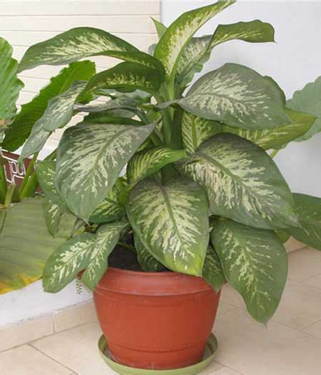 home plants killer house plant warning