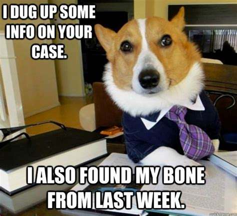 Dog Lawyer Meme - best of the lawyer dog meme damn cool pictures