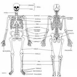 appendicular skeleton worksheet defendusinbattleblog
