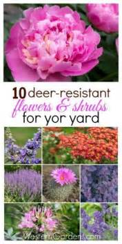 2214 Best Everything Plants And Flowers Images On Pinterest 17 Best Ideas About Deer Resistant Plants On Pinterest