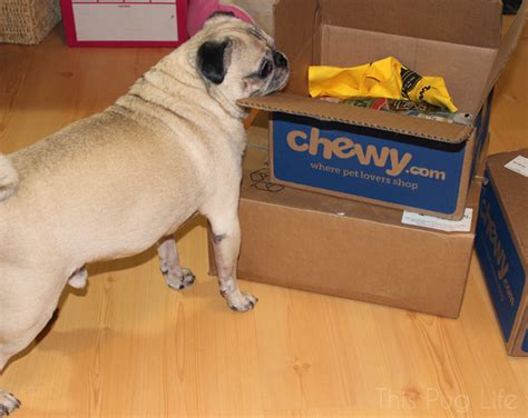 pug delivery special delivery for pug and molly this pug