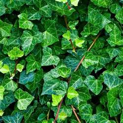 10 plantes assainissantes liste ooreka