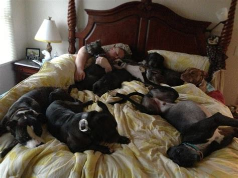 dogs sleeping in bed couple builds ginormous bed so their 7 dogs can join them