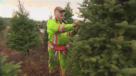 freds christmas tree tree shortage wholesalers in scotia sell out for the season cbc news