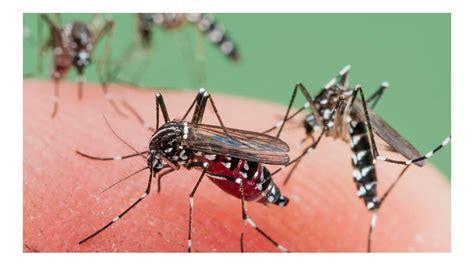 191 por qu 233 se reunieron todos los nominados a los premios oscar 2018 imagen chusca de mosquito 191 por qu 233 hay una invasi 243 n de mosquitos en oto 241 o ciudad