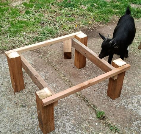 goat bedding a bed for olive the urban goatherder