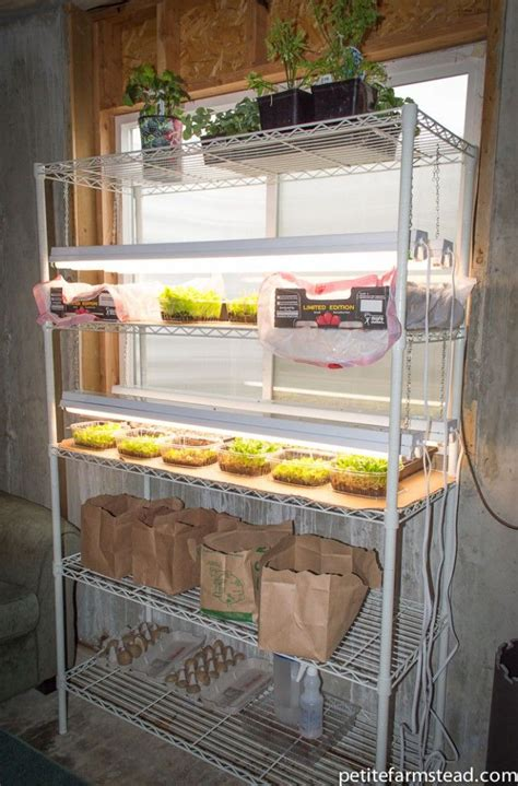 How To Grow Top Shelf by 17 Best Ideas About Grow Lights On Grow Lights