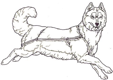 husky coloring sheets coloring pages husky dog coloring