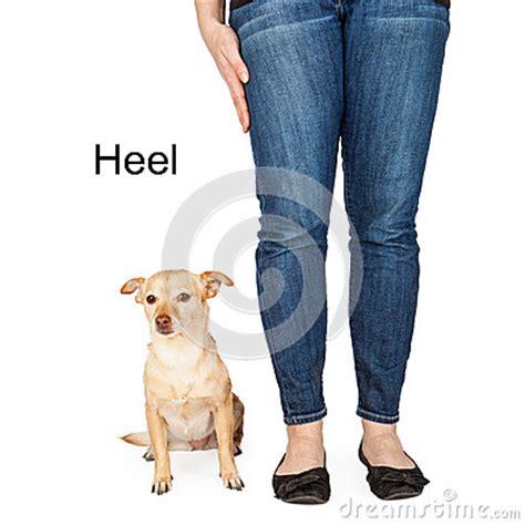 heel command heel command stock photo image 48718209