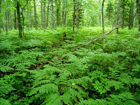 Which Animal Occupies A Rainforest Floor Niche - es 6 notes on emaze