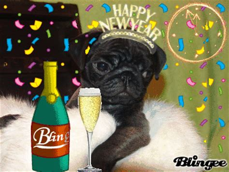 new year pug happy new year pug picture 127478844 blingee
