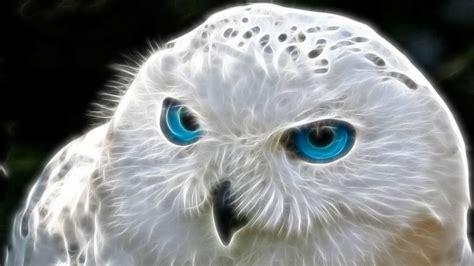 Piyama Owl Blue Piyama Owl owl hd wallpaper and background 1920x1080 id 387927