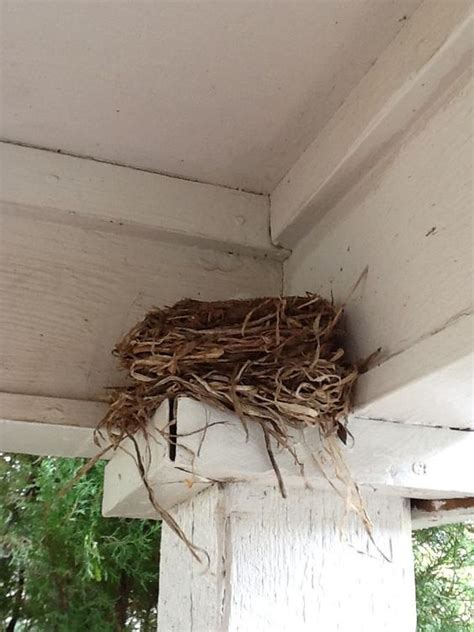 nests porches and birds on pinterest