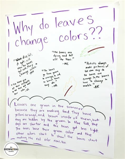 how do leaves change color leaf chromatography why do leaves change color the