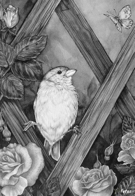 grayscale coloring 17 best images about vogels uilen enz on