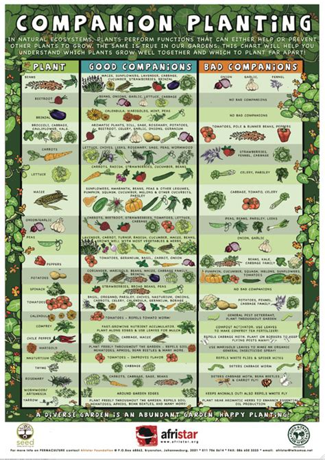 gardening guides companion planting guide diy or die survival in a post