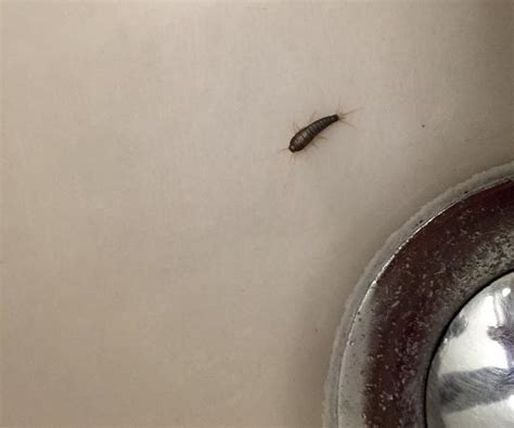 small jumping bugs in bathroom vue apr 232 s une nuit de niege bild fr 229 n hotel neutor