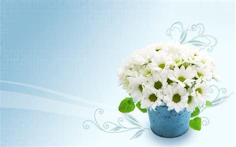 wallpaper flower white white flowers hd wallpapers 6 desktop background