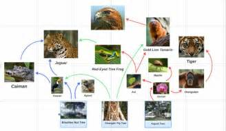Jaguars Food Chain A Complex Web Of Relationships Bounty Biodiversity