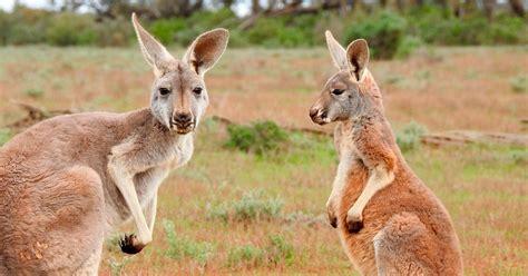 imagenes animales en peligro de extincion 10 animales en peligro de extinci 243 n guiaongs org