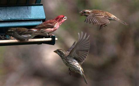 nj backyard birds backyard birds 2015 hackettstown nj gogo papa