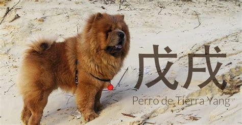 2018 el aã o perro de tierra edition books feng shui 2018 a 241 o perro de tierra feng shui con