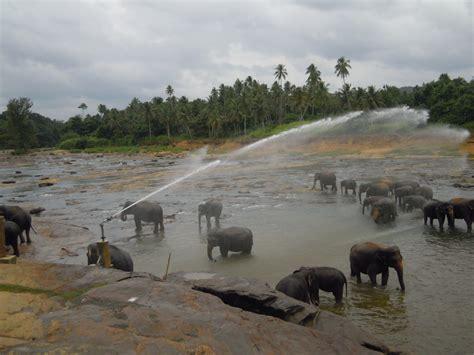 turisti per caso sri lanka pinnawala viaggi vacanze e turismo turisti per caso