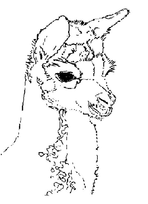 alpaca outline drawing