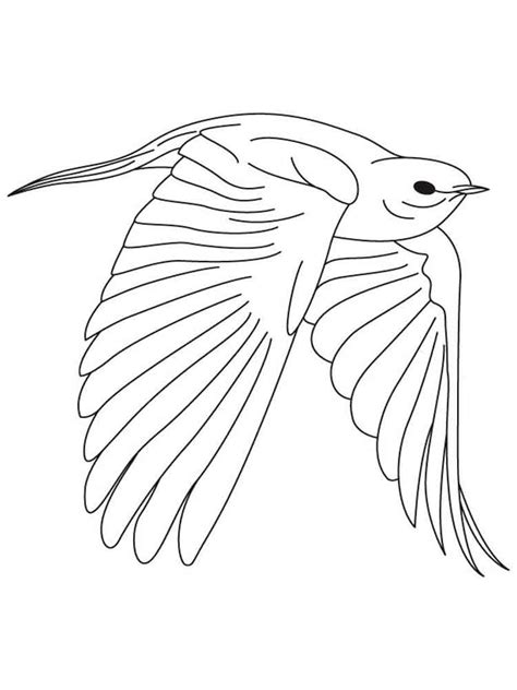 bluebird coloring pages download and print bluebird