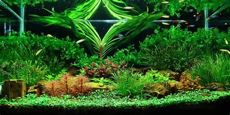 aquascaping layouts aquascape layout 28 images marcel dykierek and