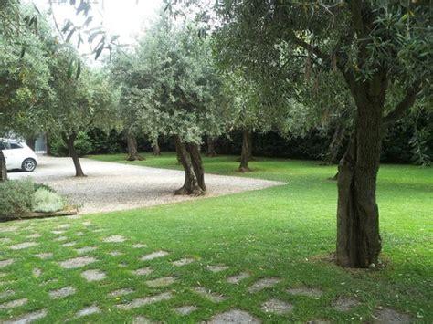 ulivi in giardino giardino di ulivi foto di villa a rosse seravezza