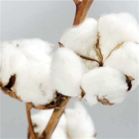 Langerie Cotton coton pour que la ne rime pas avec