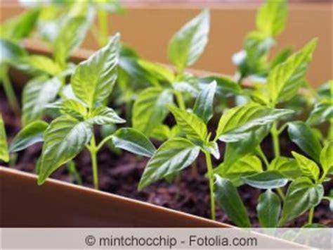 garten im mã rz pflanzen pflanzzeiten f 252 r gem 252 se was s 228 t im m 228 rz april und