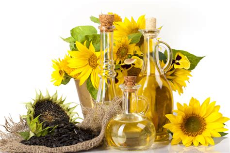 Minyak Bunga Matahari minyak bunga matahari magazine